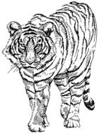 Crafty Stamps - Tiger small - AN138HF