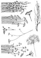 CS190D - Hobby Art Stamps - Wildflowers - Janie's Collection