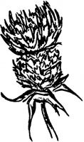 Crafty Stamps - Thistle 3 (m) - SC105B