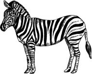 Crafty Stamps - Zebra - AN157M