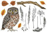 Little Owl Hobby Art Stamp Set (CS210D)